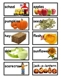 Fall Picture Vocabulary Word Wall Cards and Individual Word Wall tc
