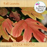 Fall Red and Yellow Leaves