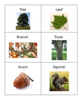 Fall Vocabulary Cards- Real Pictures