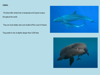 False Killer Whale - Power Point facts, information, history, pictures