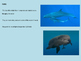 False Killer Whale - Power Point facts, information, histo