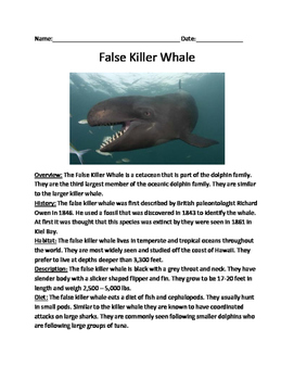 False Killer Whale - informational article facts - questions,  word search