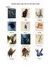 Fantastic Beasts and Where to Find Them - Matching Exercise