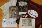Fantastic Fossils Science Literacy Bag (3-5)