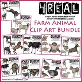 Farm Animal Clip Art for Teachers BUNDLE - Realistic Farm