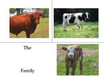 Farm Animal Family Name Practice