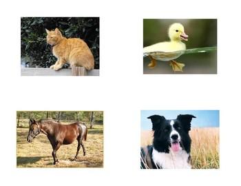 Farm Animal Flash Cards
