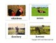 Farm Animal Flashcards - Barnyard Friends!