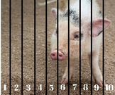 Farm Animal Number Sequencing 1-10