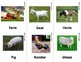 Farm Animal Sign Language (ASL) Flash Cards with Descriptions