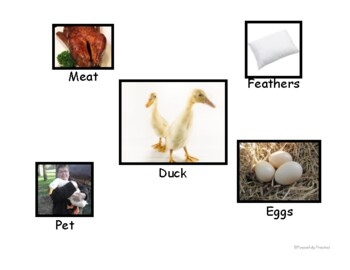 Farm Animal Uses