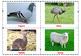 Farm Animals Pet Animals