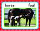 Farm Animals Big Book