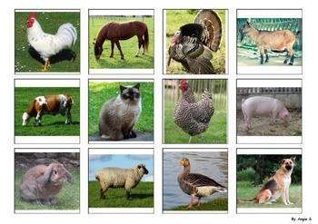Farm Animals Matching Activity