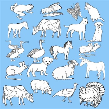 Clip Art - Farm Animals - 61 Color and Black Line Realistic Clips