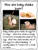 Farm Animals- Close Reading- Kindergarten & First Grade