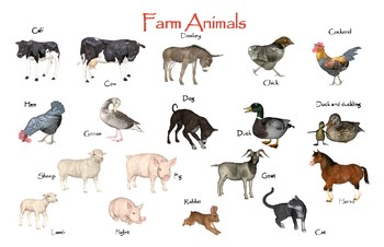"Farm Animals Poster:  ""Ledger/Tabloid"" (11 x 17 inches)"