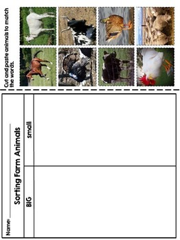 Farm Animals Sorting - First and Second