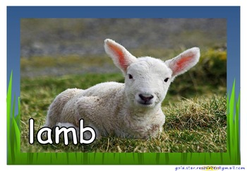 Farm Animals and Babies Photos/ Pictures for Display/ Posters Science