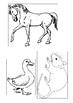 Farm Animals - english & afrikaans