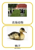 Farm Animals in Chinese Flashcards