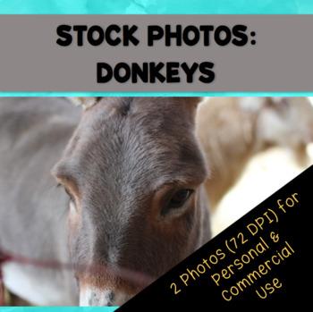 Farm Donkeys Stock Photos