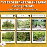 Farm Plants Types Sorting Cards (tree, bush, herbaceous plant)