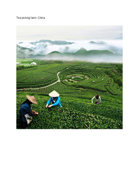 Farms Around The World Booklet