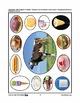 Farmyard Friends - Eight Fun Activities PreK-K
