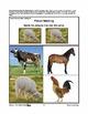 Farmyard Friends - Vocabulary & Sequencing Activities PreK-K