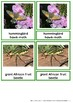 Fascinating Arthropods Of Africa - Montessori Nomenclature