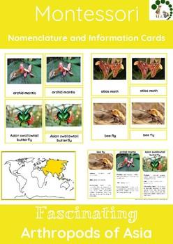 Fascinating Arthropods Of Asia - Montessori Nomenclature A