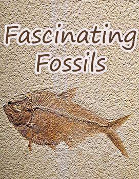 Fascinating Fossils!