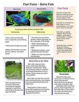 Fast Facts - Betta Fish