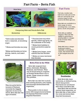 Close Reading - Fast Facts - Betta Fish