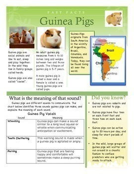Fast Facts - Guinea Pigs