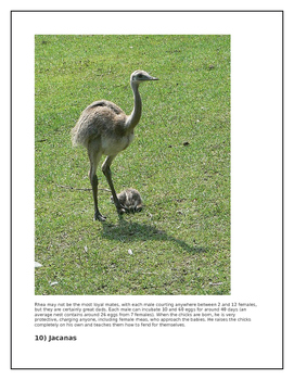 Animals that are Great Dad's-A father's Love