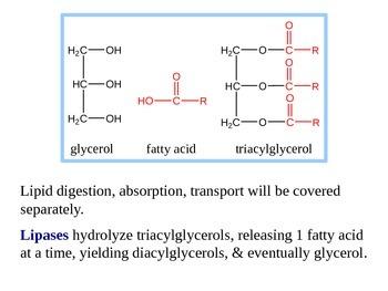 Fatty Acid Oxidation Explained (Handout / PPT Presentation)