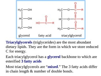 Fatty Acid Oxidation Explained (Handout / PPT Presentation)
