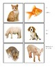 Favorite Animals - Montessori Matching Cards