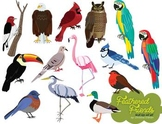 Feathered Friends Bird Clip Art Set