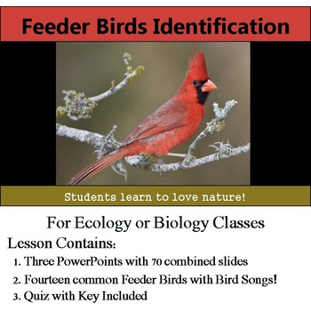 Feeder Bird Identification - 14 Common Birds - Includes Bird Songs!