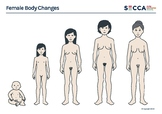 Female Body Changes Activity Sheet (A4 printable .pdf)
