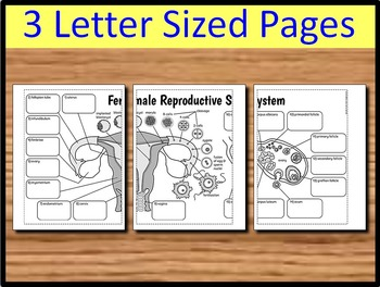 Female Reproductive System - Big Foldable for Interactive Notebooks or Binders