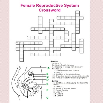 Female Reproductive System Crossword Puzzle