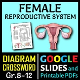 Female Reproductive System Crossword with Diagram {Editable}