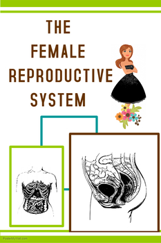 Female Reproductive System in Humans (BUNDLE)
