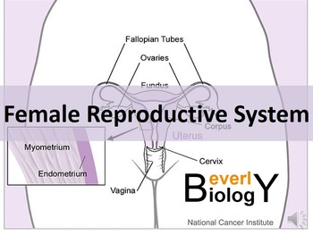 Female Reproductive System (with free handout)