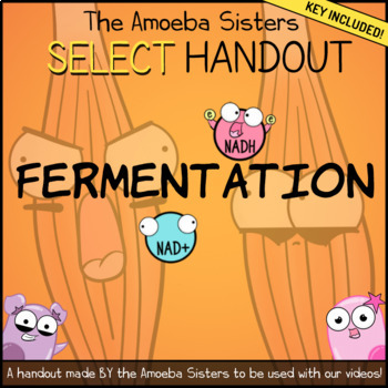 Fermentation- SELECT Recap + Answer Key by Amoeba Sisters
