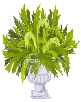 Fern in Urn Planter - fern clip art, Printable Tracey Gurley Designs